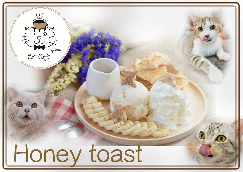 Cat Cafe by Dome (1)
