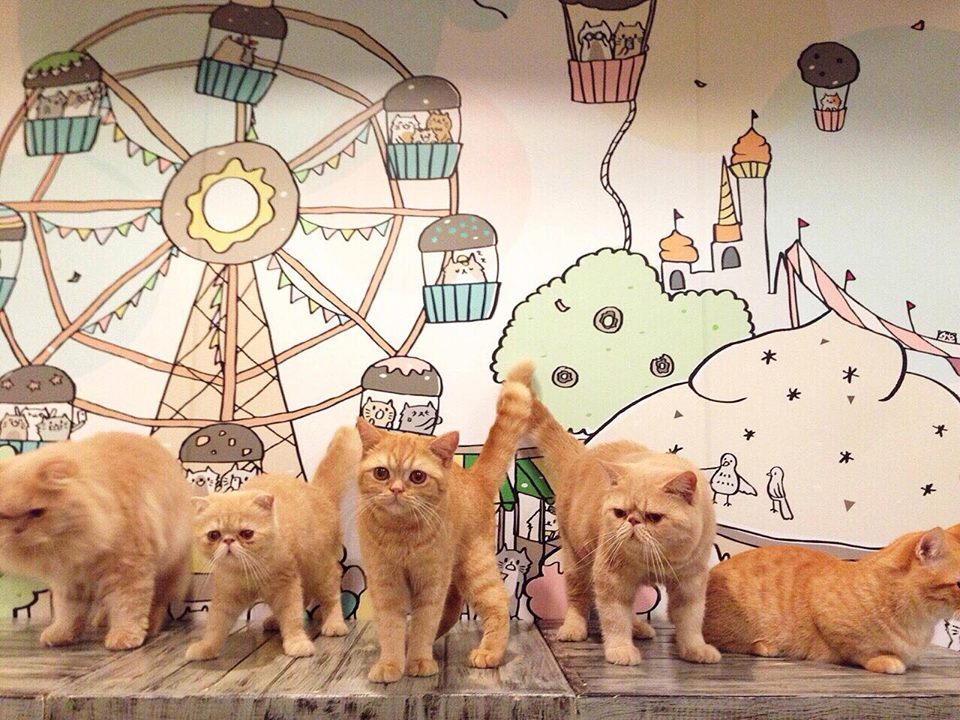 Caturday Cat Cafe (18)