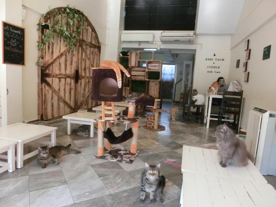 Kitty Cat Cafe (2)