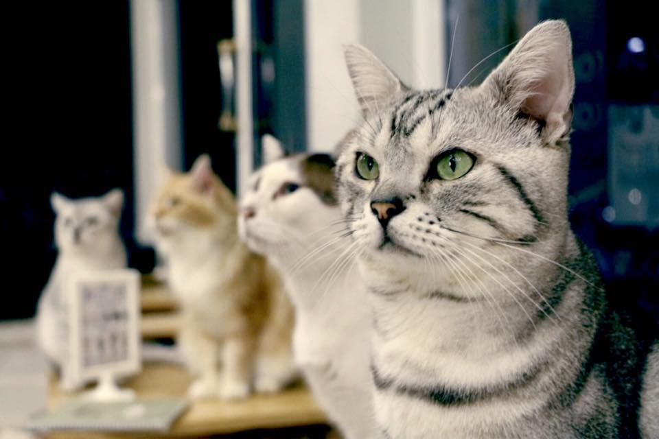 Makura Cat Cafe (6)