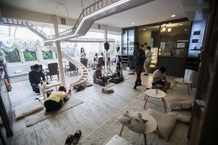 Purr Cat Cafe Club (4)