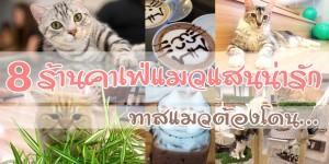 8 ร้านคาเฟ่แมวแสนน่ารัก ทาสแมวต้องโดน